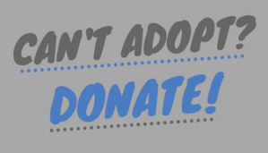 Cant Adopt_davis
